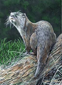 Otter on Branch by John Neeve