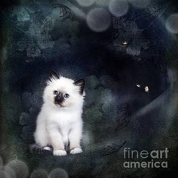 Our Cat World by Monique Hierck