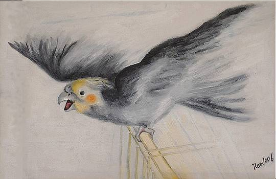 our cockatiel  Coco by Helmut Rottler