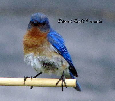 Betty Pieper - Our Own Mad Blue Bird
