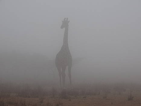 Out Of The Mist by Sandra Durning