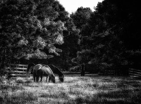 Out To Pasture BW by Mark Fuller