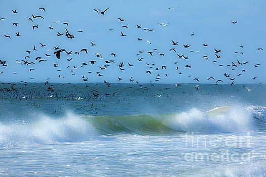 Dan Carmichael - Outer Banks Birds Over Crashing Waves