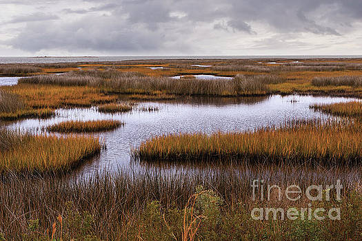 Dan Carmichael - Outer Banks Cedar Island Swamp Grass