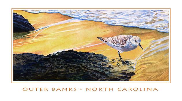 Outer Banks Sanderling by Bob Nolin