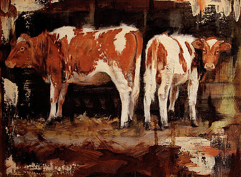 Outshed Ayrshires  by Susie Gordon