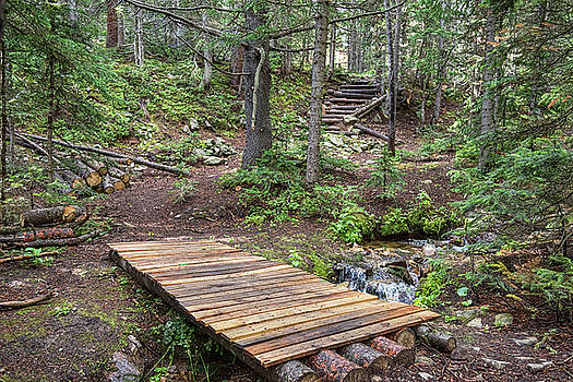 Over the Bridge and Through the Woods by James BO Insogna