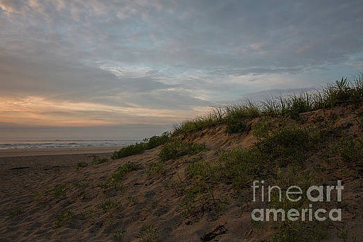 Over the Dunes by Mim White