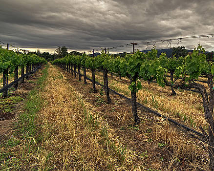 Overcast Vineyard by Richard Hinds