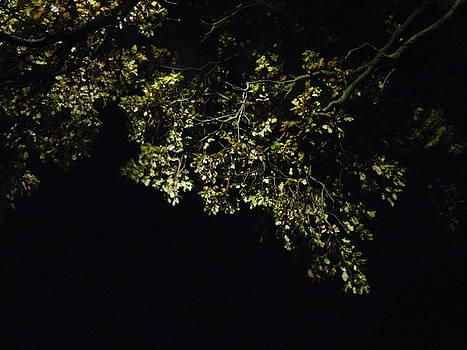 Overhead Branch by Nik Watt