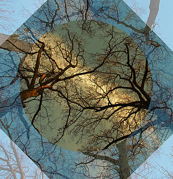 Overhead of Tree Branches by Donna Haggerty