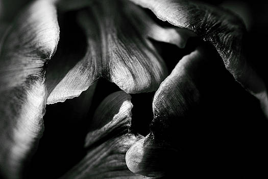 Overlap-Black and White by Brian Pflanz
