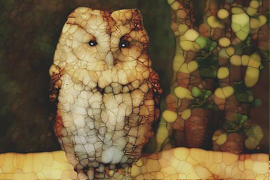 Owl 5 by Jack Zulli