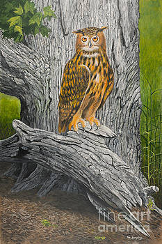 Owl And The Old Tree by Timothy Spongberg