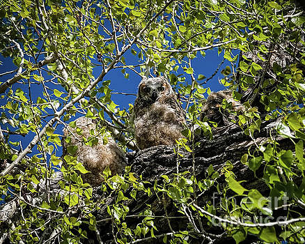 Jon Burch Photography - Owl Be With You In A Moment