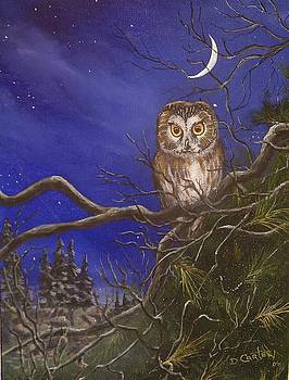 Owl by the Moonlight by David Carter
