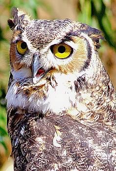 Owl by Carol Tsiatsios