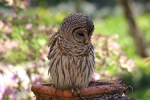 Paulette Thomas - Owl Deep In Thought