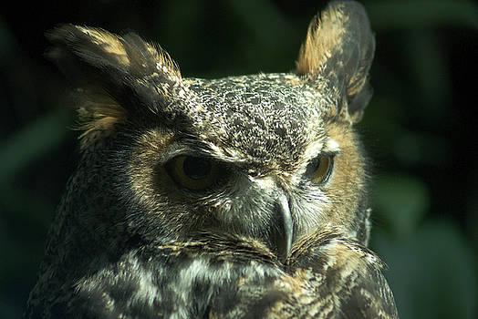 Owl Eyes by Jan Stittleburg