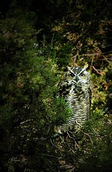 Owl Eyes by Lori Grimmett