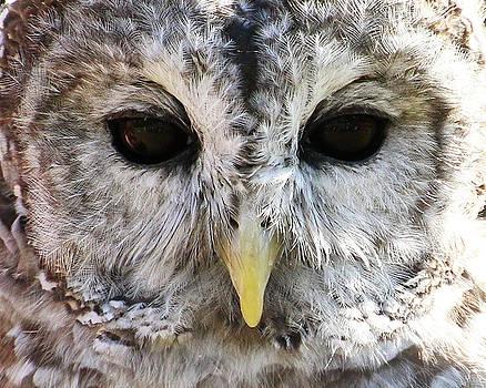 Owl Eyes by William Selander