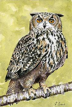 Owl by Frances Evans