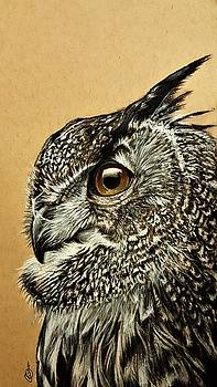 Owl by Gilca Rivera