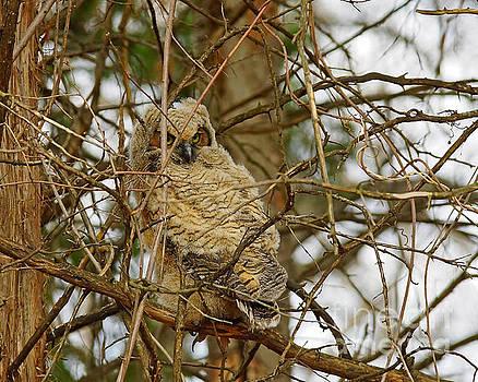 Owl Nursery by Robin Clifton