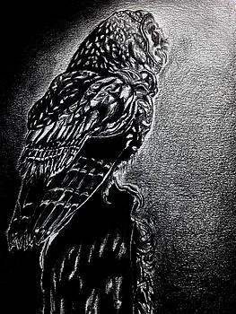 Owl Of The Night by Portland Art Creations