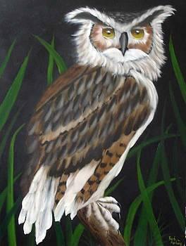 Owl oil painting by Barbara Furlong