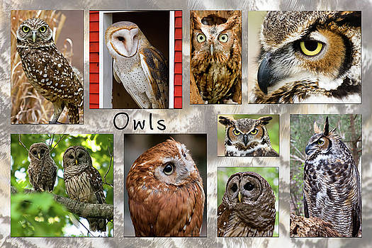Jill Lang - Owl Photomontage