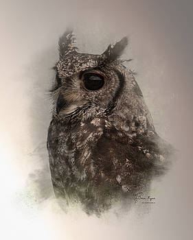 Owl by Bren Ryan