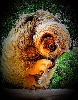 Owl With Magnifying Glass by Kori Creswell