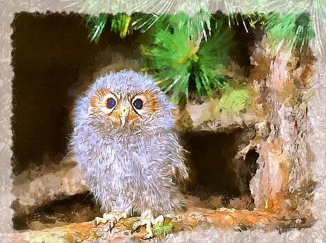 Owlet-Baby Owl by Maciek Froncisz
