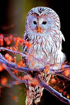 Owlrightythen by Michael Todd
