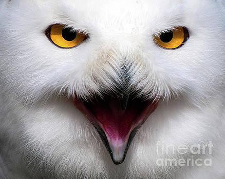 Owlsome by Eyeshine Photography