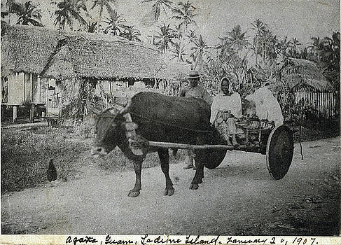 Ox Cart Guam 1907 by eGuam Photo