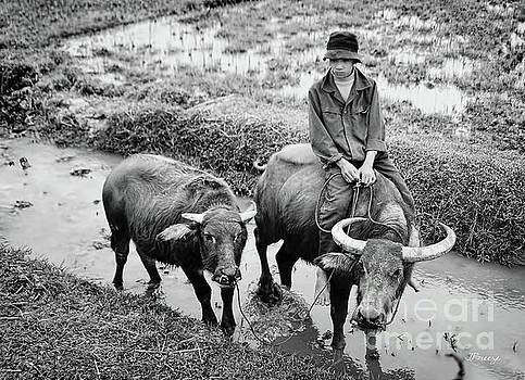 Oxen Day Off.Cambodia BW by Jennie Breeze
