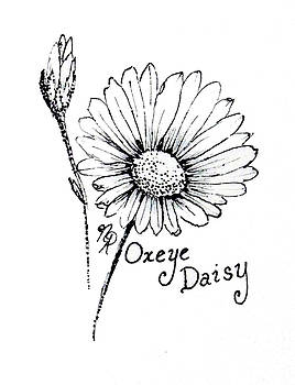Oxeye Daisy by Nicole Angell