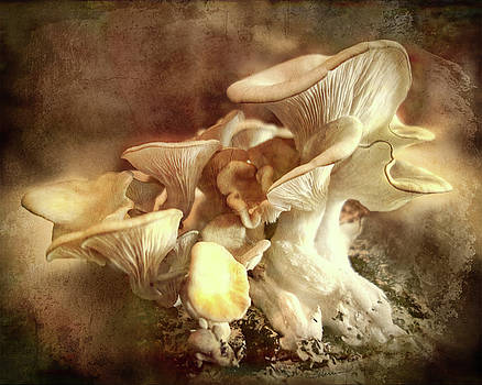 Oyster Mushrooms by Cindy Collier Harris