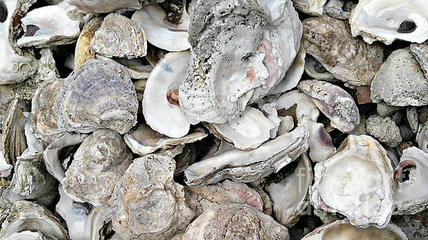 Oyster Shells, Too by Sallie Anderson