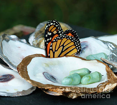 Oyster Shells with Chrysalis and Butterfly by Luana K Perez