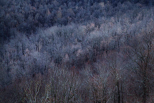 Ozark Trees #3 by David Chasey