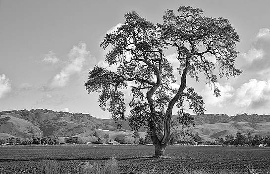 Pacheco Pass by Sonny Marcyan