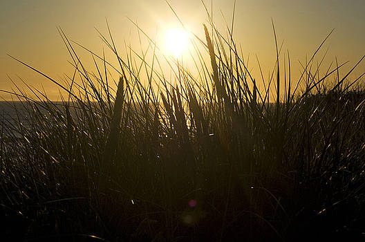 Pacific Grass Oregon Dunes by Kristen Vota
