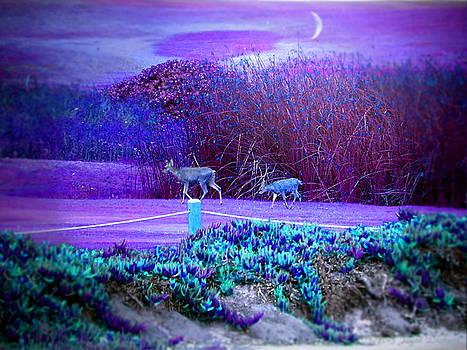 Joyce Dickens - Pacific Grove Golf Links Deer In The Moonlight