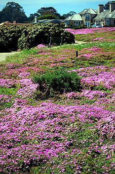 Joyce Dickens - Pacific Grove In Bloom