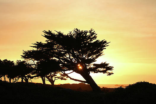 Art Block Collections - Pacific Grove Sunset