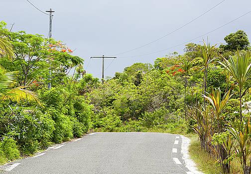 Ramunas Bruzas - Pacific Island Road