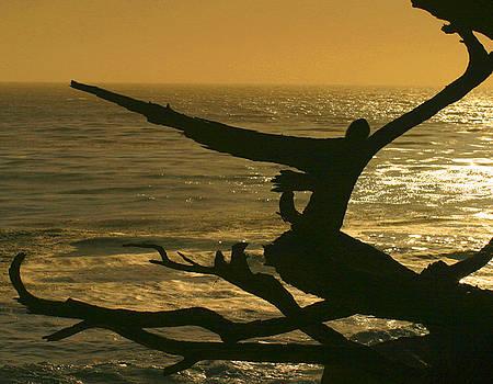 Pacific Ocean at Golden Sundown by Nabila Khanam